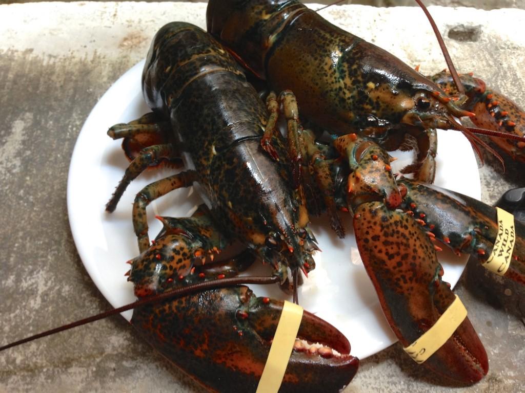 Gotowany homar – najprościej 2